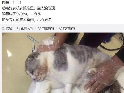 猫咪调皮钻进洗衣机睡觉,结果主人没发现就启动,不过结局好险