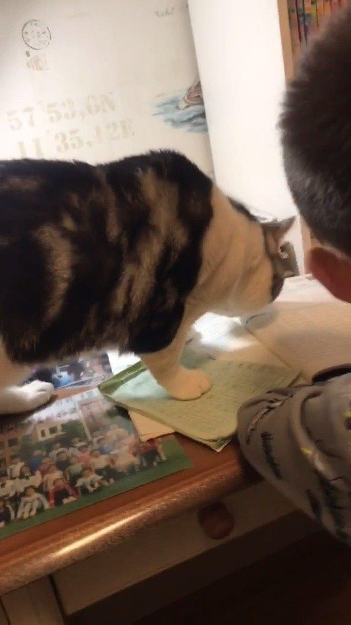 作业写不好,是因为有猫腻