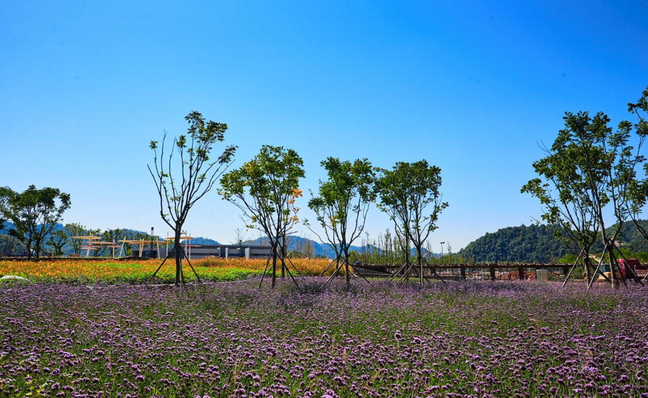 景德镇西河湿地公园二期,风景棒棒哒