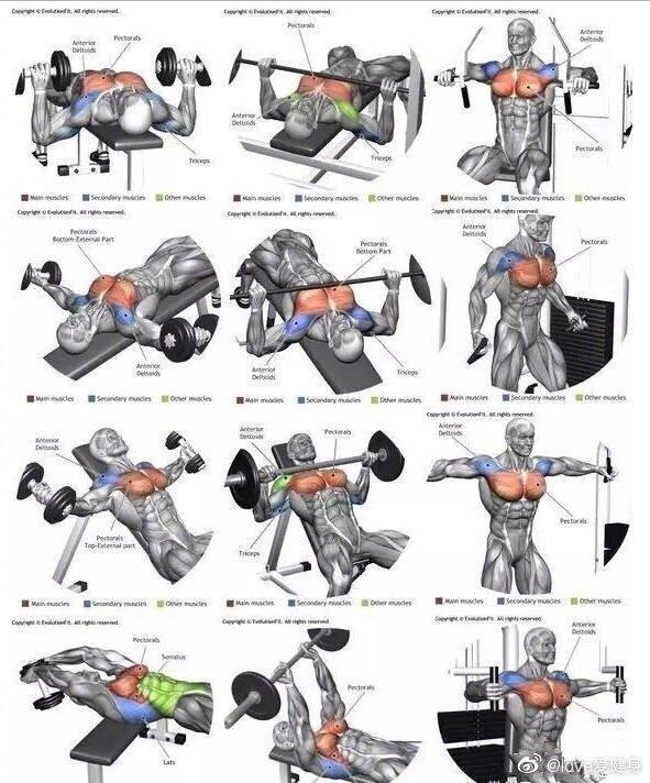 全身肌肉训练图谱告诉你,各部位肌肉该怎么练