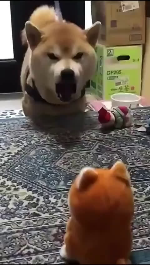 狗:我是怎么叫来着?