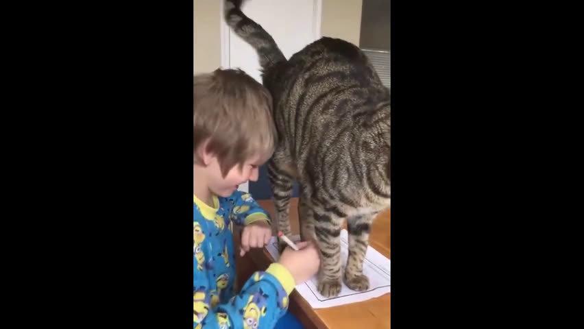我作业写不完真的是有原因的啊...有..有猫撸我......
