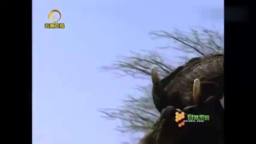 自然密码:大象用身体推挤犀牛,犀牛不敢反击,弱者只能被欺负!