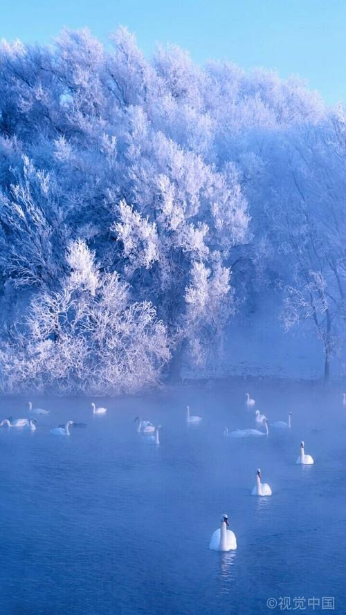 新疆伊犁天鹅湖触手可及的天鹅童话世界看到的朋友们 祝你们一