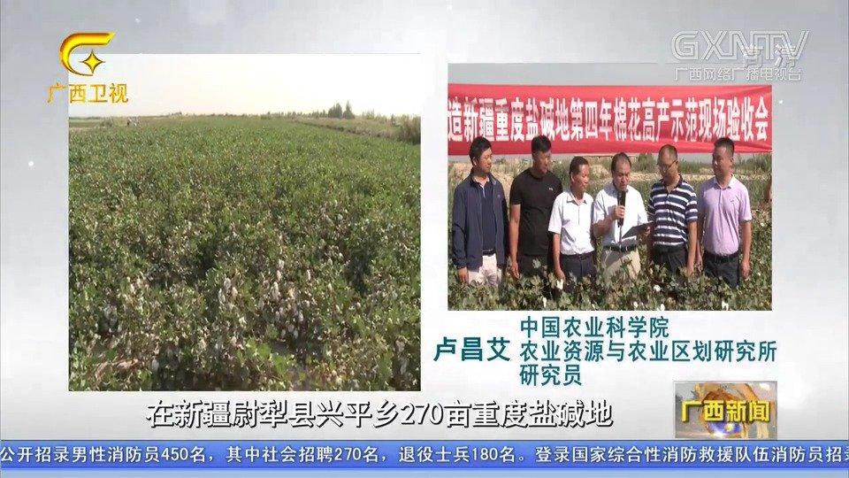 """广西粉垄:为世界物理低成本改造盐碱地提供""""中国方案"""""""