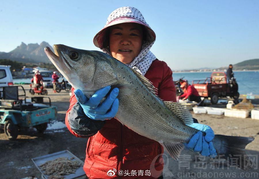 去扫货吧 仰口渔港小海鲜大丰收 品种多吃到爽