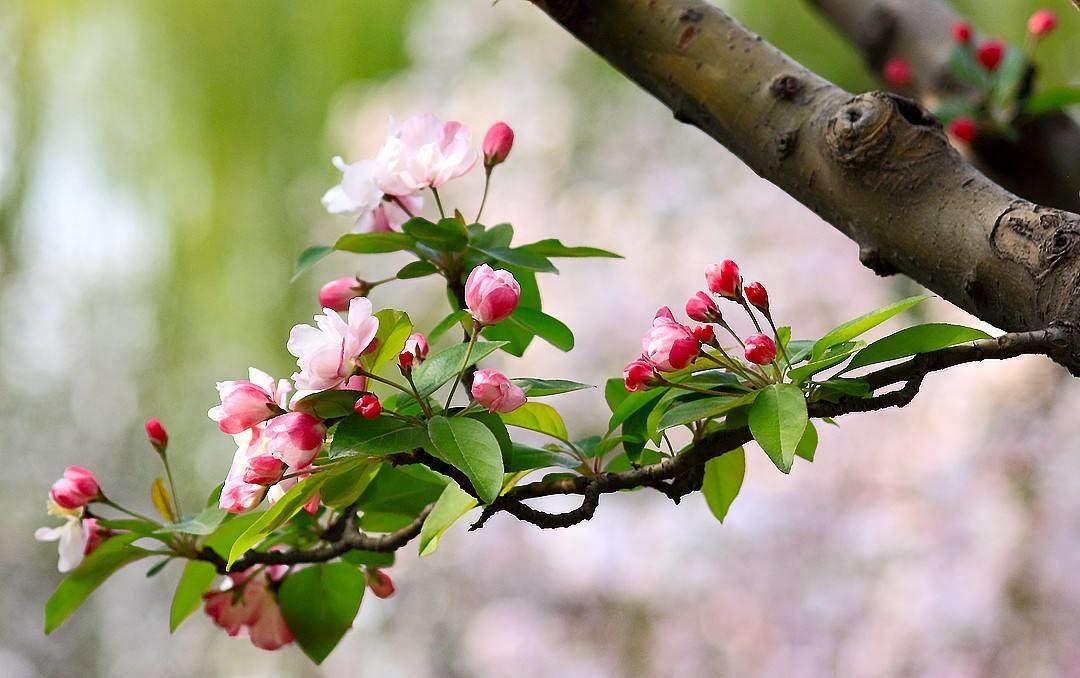 美丽春景诗词精选一十七首千红万紫安排著,只待新雷第一声