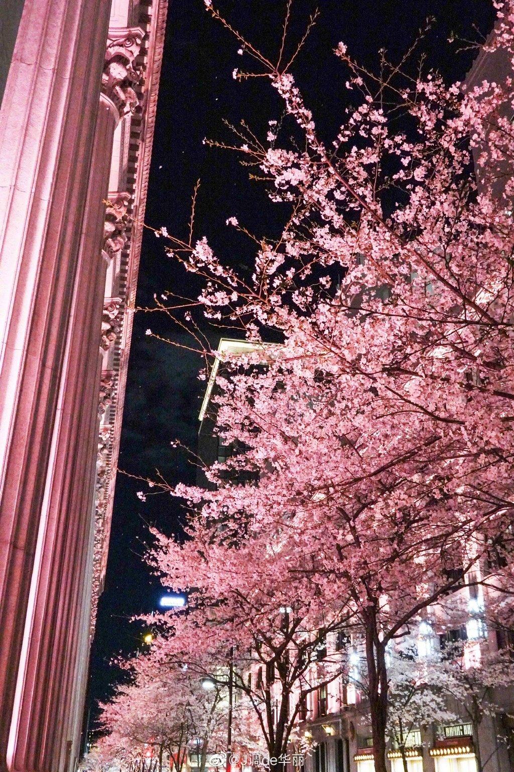 六义园、目黑川、千鸟渊、日本桥江户樱花隧道……在东京的夜晚