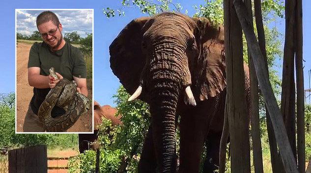 南非大胆向导被大象踢腿毫不畏惧 出声将其赶走