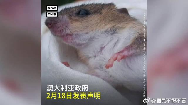 2月18日,珊瑚裸尾鼠灭绝已被澳大利亚官方确认