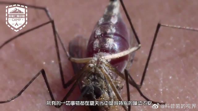 一款高大上的灭蚊神器,一秒钟就能消灭一百只蚊子,太厉害了!