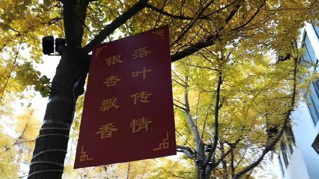 甘肃的网红街,古城秦州,满城尽带黄金甲。