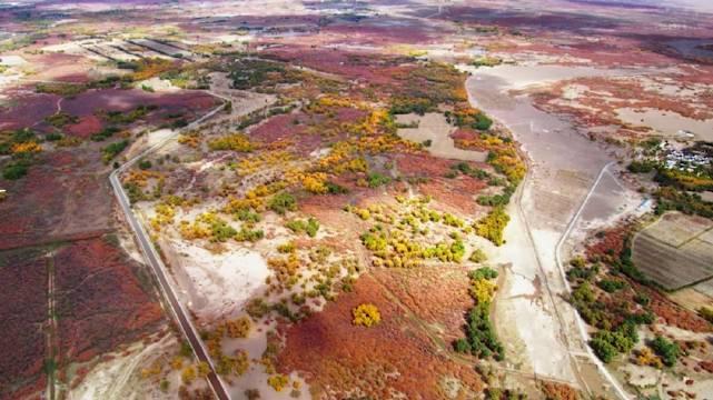 内蒙古额济纳,沙漠里的胡杨。关注@热门表哥 观看更多热门视频