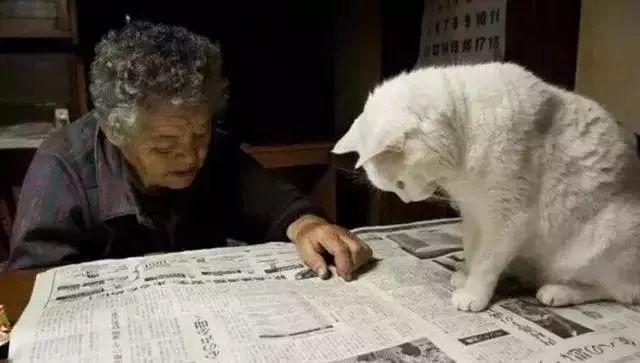 养猫前后的长辈