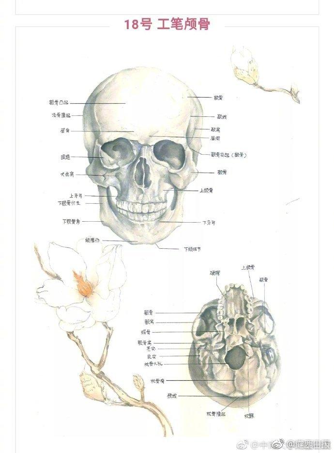 """医学生解剖学手绘图走红,网友:被医学耽误的""""灵魂画手"""