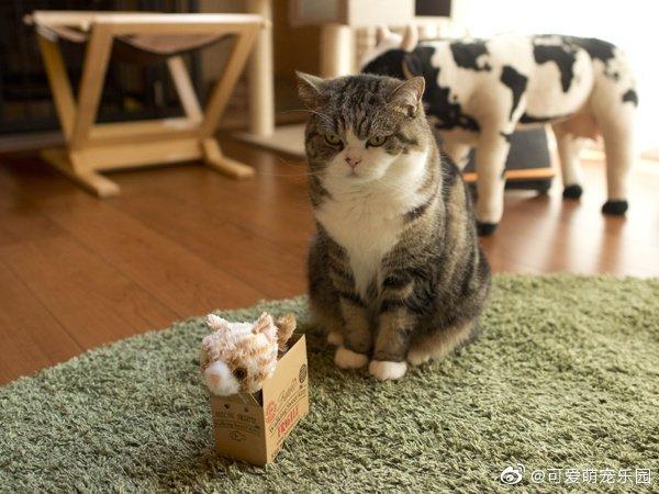Maru:虽然你是个小可爱公仔,可是纸盒还是偶的