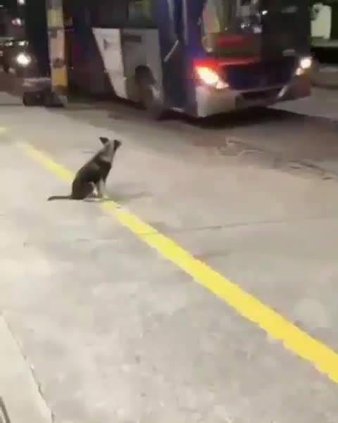 国外一条流浪狗,每天都在固定地点等候公交车司机路易斯先生的出现