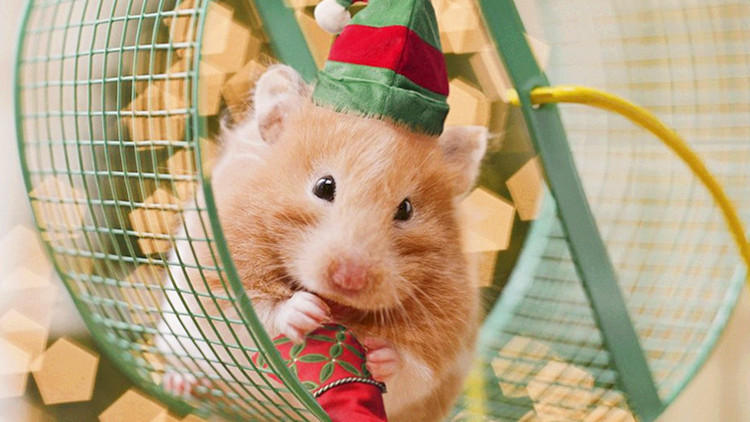 搞不定一只小仓鼠,你还有脸养账号蜗牛宠物能买吗图片