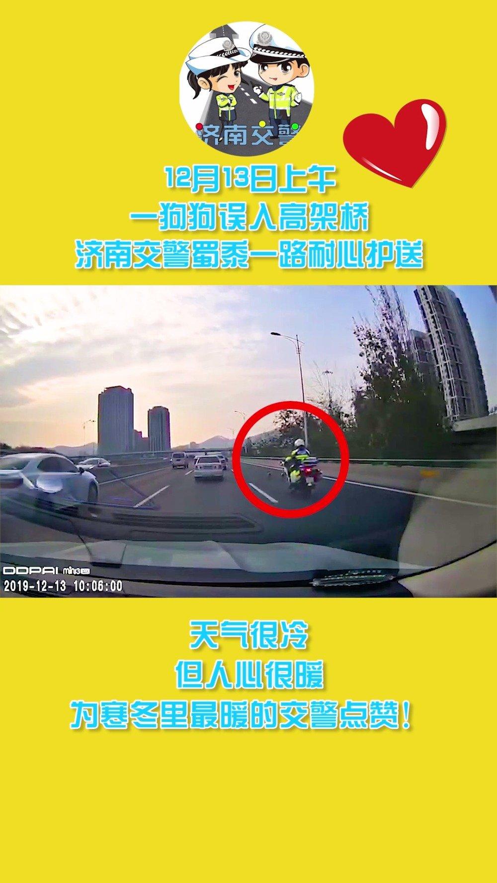 12月13日上午,狗狗误入高架桥