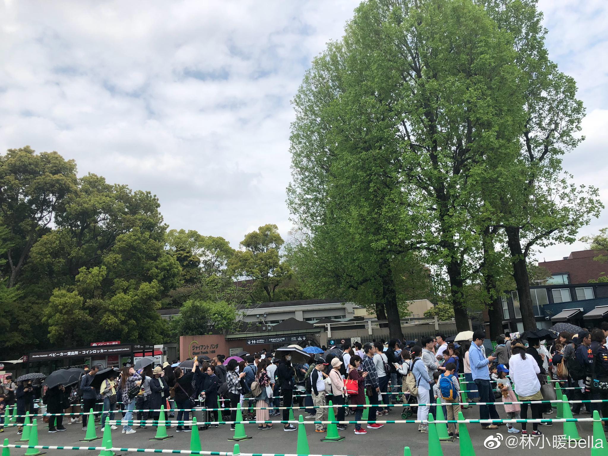 上野公园里的动物园,一进门就是熙熙攘攘的队伍