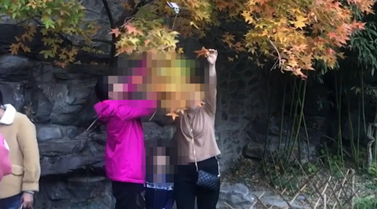 如此言传身教?家长带孩子游北京香山景区,狂摘树叶自拍