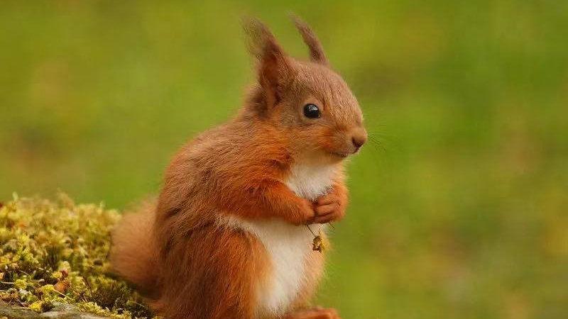 找不到藏起来的松果,小松鼠会饿死吗?