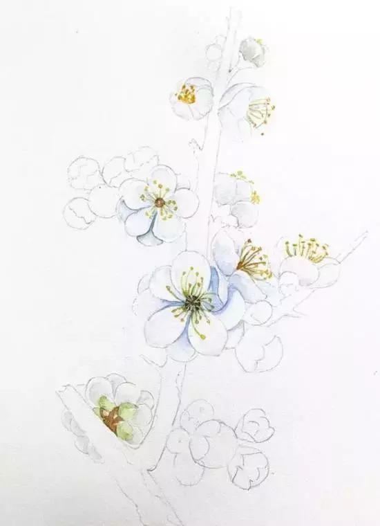 超详细水彩教程,水彩梅花手绘教程,你学会了吗?