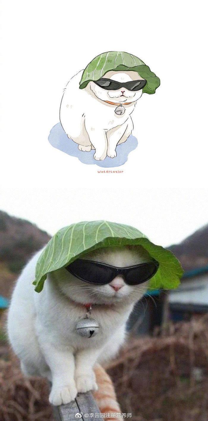 人有各种各样的生活日常,猫也有它的生活百态,好治愈的一组画儿