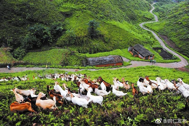 全市畜牧业发展迅速,遍地都是牛和羊