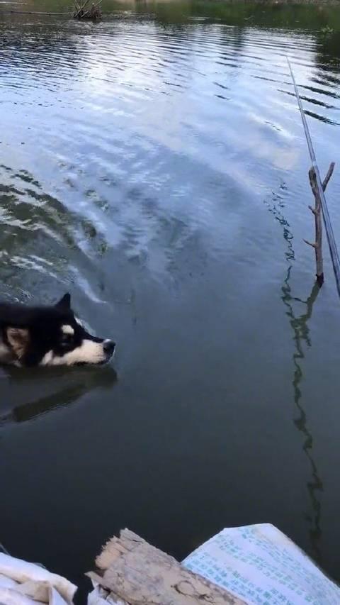 """""""鱼?什么鱼?我怎么没看到鱼?"""""""