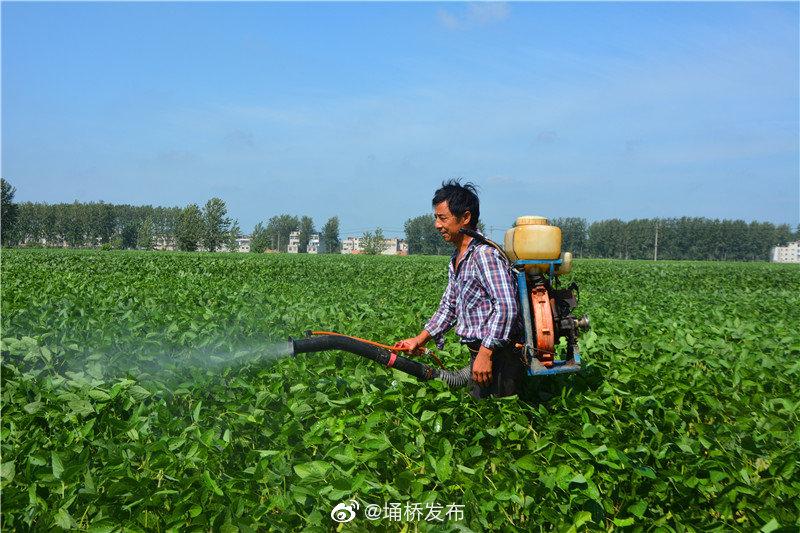 防治大豆病虫害正当时