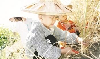 体验农耕文化 南靖幼儿园孩子下田收割水稻