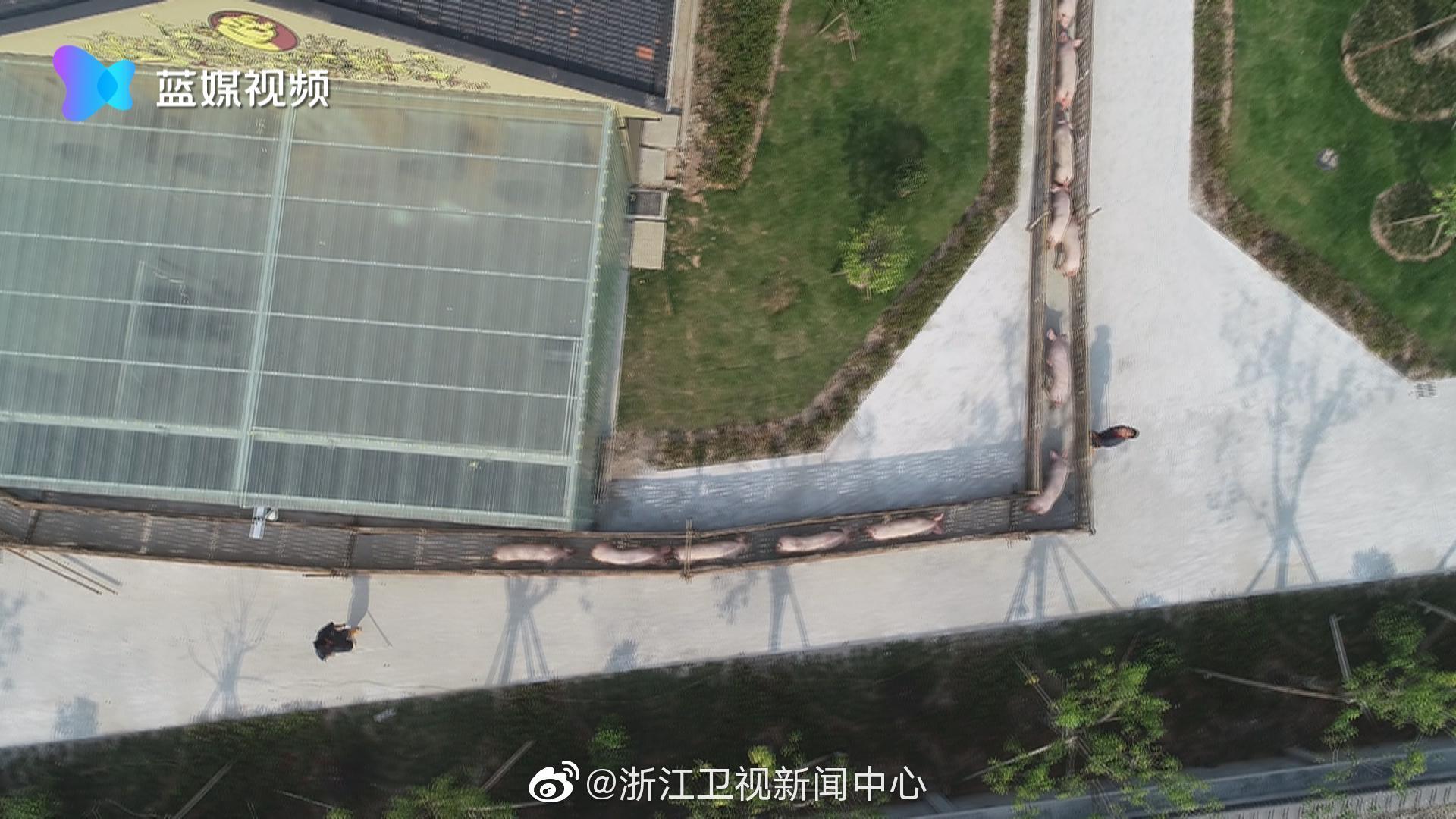 舟山:楼房养猪场通过验收 每年可供种猪1500头