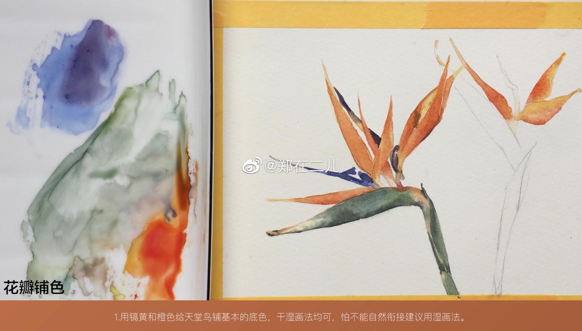 水彩步骤图 | 天堂鸟颜料:史明克24色固体纸张:获多福