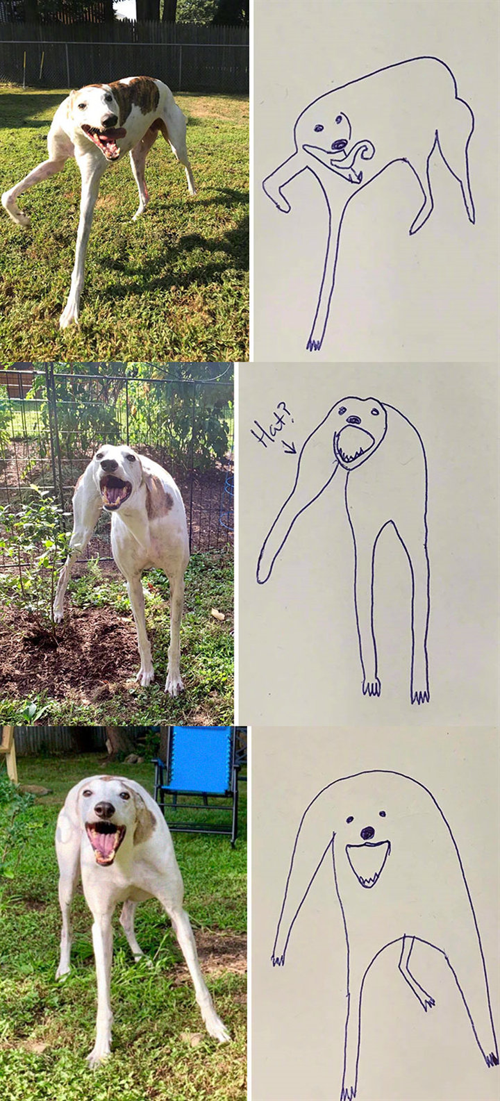 国外一位狗主人po出自己随便画的怪异狗子涂鸦,没想到竟然意外走红