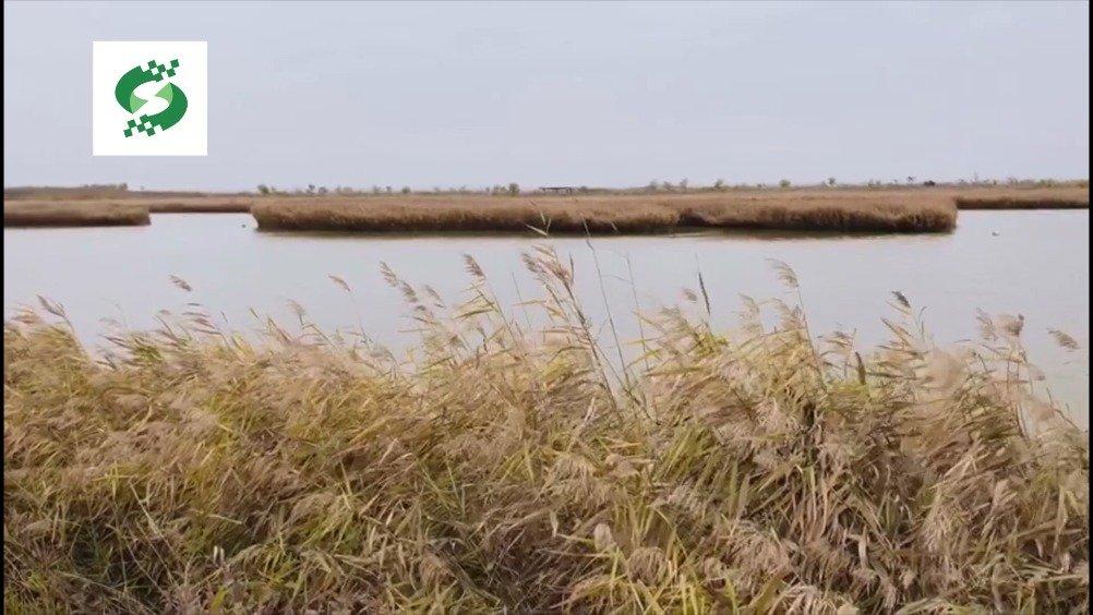 寿光巨淀湖美景