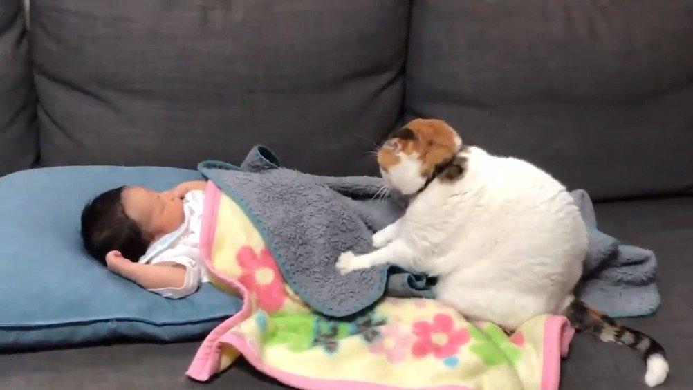 正在接受专业按摩师按摩的宝宝
