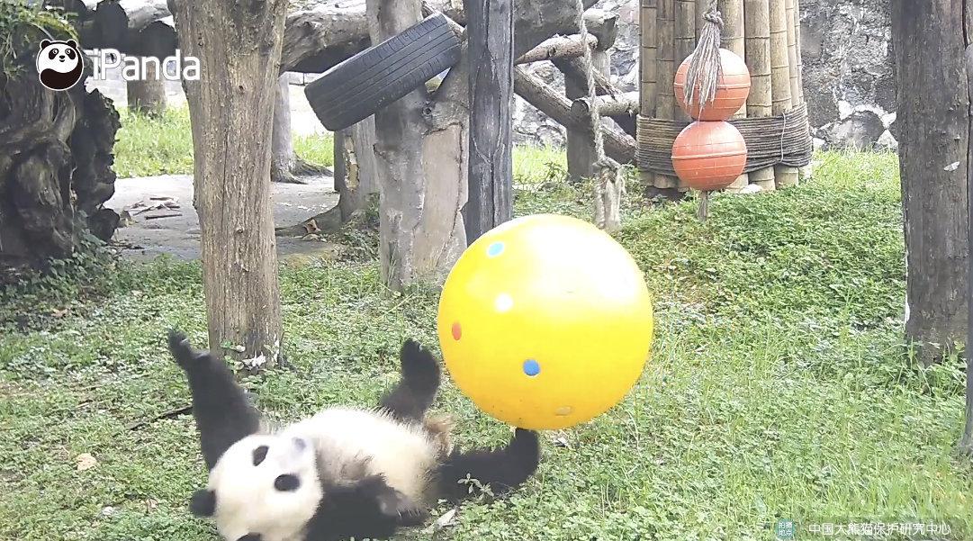 说出来你可能不信,我刚刚居然被一颗球给撂倒了!委屈