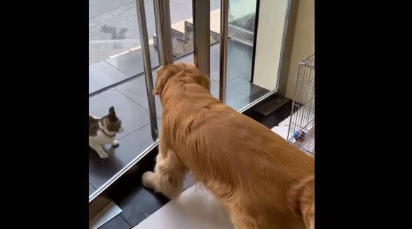 狗狗为了自己家猫不惹事,简直操碎了心!!!