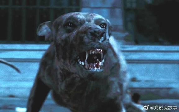 丧尸病毒大爆发,狗狗为救主人,拼了自己的命对战丧尸救下主人!