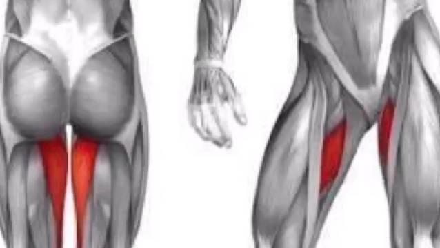 AchieveFitnessBosto最新推荐 - 如何练内收肌群/大腿内侧