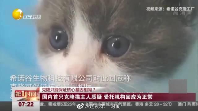 国内首例克隆猫主人质疑:外观只有九成像 受托机构回应为正常