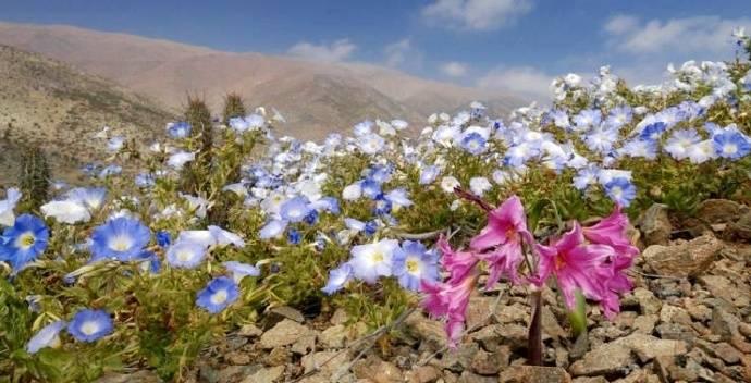 阿塔卡马沙漠,七年间没有下过雨——被称为地球上最干燥的沙漠