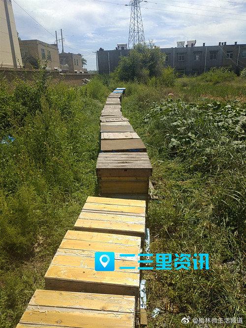 蜂农离家几天90多箱蜜蜂离奇死亡!警方介入调查