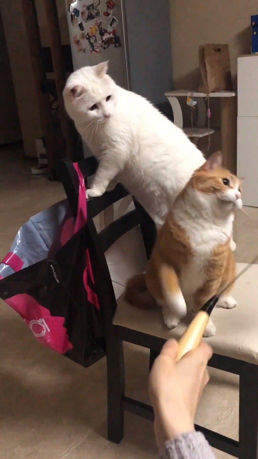 知名猫豆首度公开保持身材秘籍