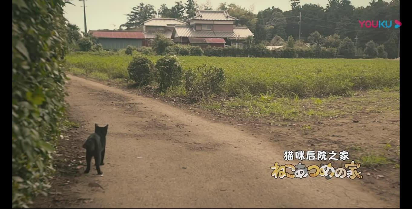 推荐一部撸猫电影,《猫咪后院之家》超级治愈哦!