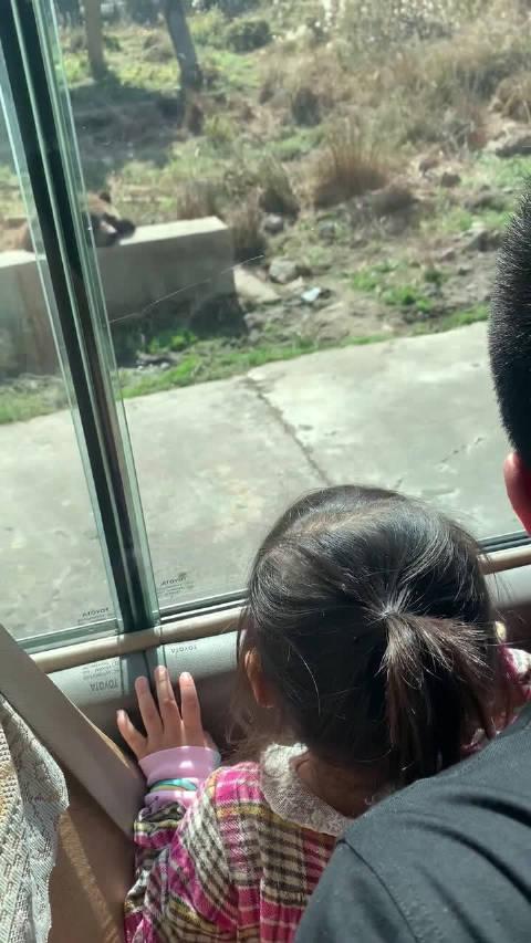 Family day~今天我们是野生动物园宝宝~