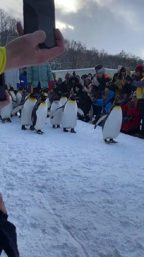 传说中的企鹅散步!阿伟死了。。。实在太可爱了。
