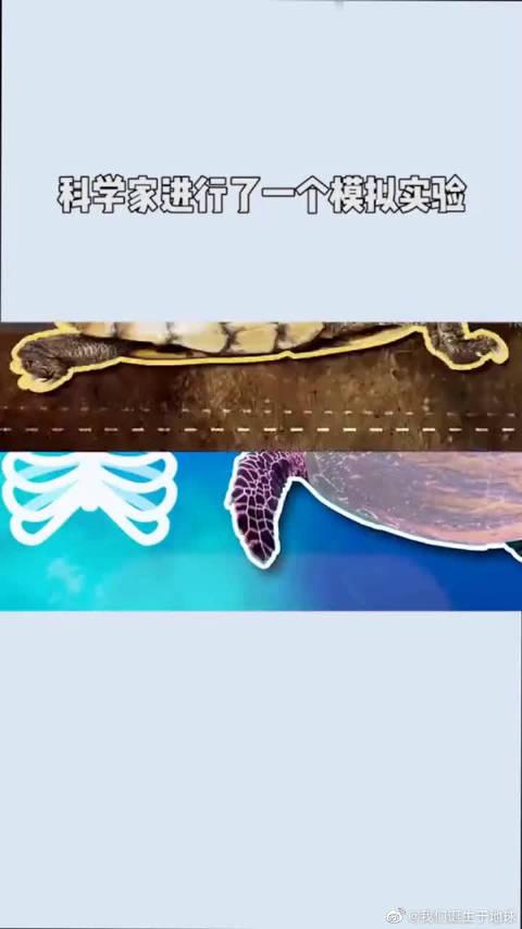 神奇动物第一期,乌龟的壳掉了会怎样呢