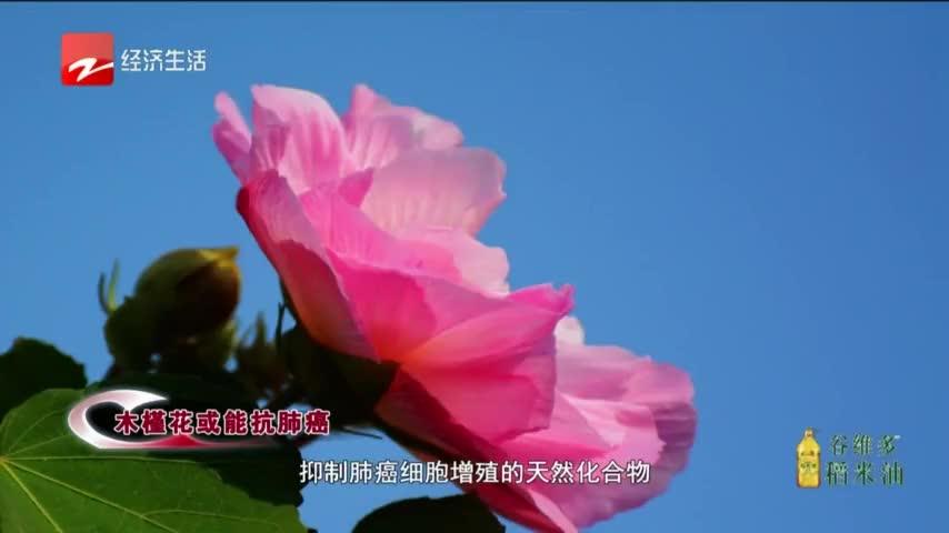 韩国国花木槿花或能抗癌!其中物质可抑制人体肺癌细胞株的增殖